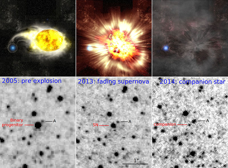 Figure 2: Images showing the supernova explosion process. Images in the top row depict an artist's conception of the supernova explosion process. The corresponding images below were taken with the Hubble Space Telescope. Left: Just before the supernova explosion. A yellow supergiant is shining. Middle: The supernova exploding (the bottom image shows the fading supernova after the explosion). Right: A bright blue star observed. (Top image: Kavli IPMU, Bottom image: NASA, Hubble )